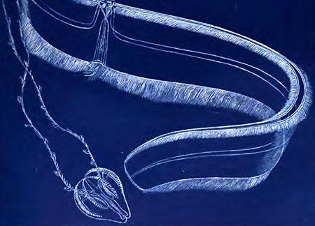 Otenophores